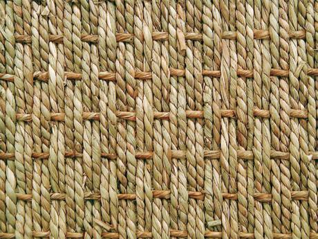 seagrass_1815